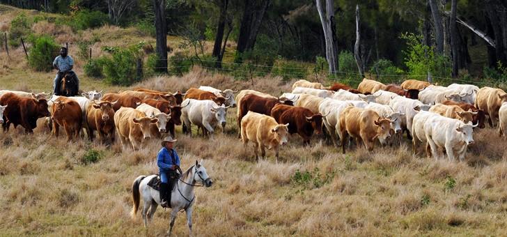 voyage-de-legende-vibrer-au-rythme-de-ambiance-cow-boy-dans-cote-ouest-nouvelle-caledonie