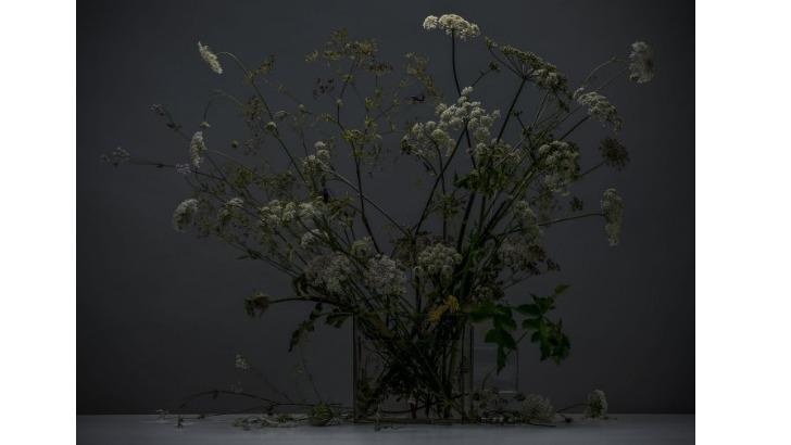 galerie-de-est-ombellifere-1-photographie-realisee-par-stephane-spach-photographe-alsacien