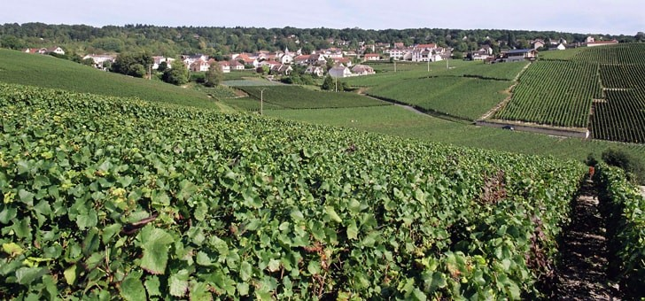 vue-sublime-vignoble-installee-vallee-marne