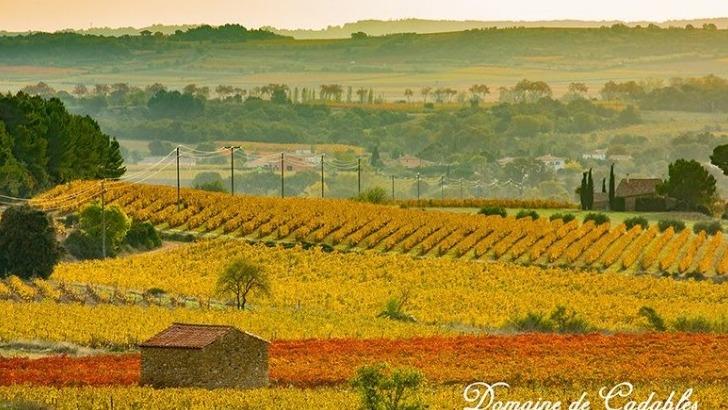 domaine-cadables-un-paysage-magnifique-au-coeur-du-languedoc