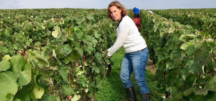 vin-vigne-assurons-suivi-qualite-production