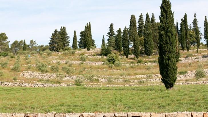chateau-martinette-une-exposition-typique-du-climat-mediterraneen