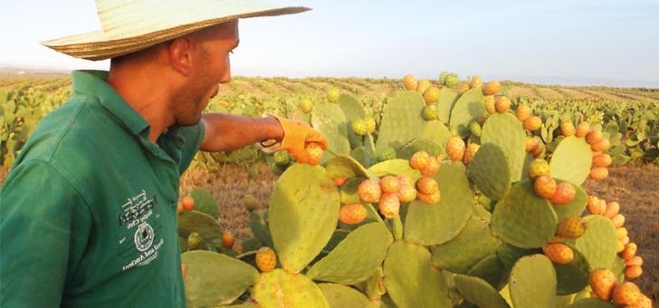nopalnutra-a-dijon-bienfaits-des-figues-de-barbarie-pour-tout-corps