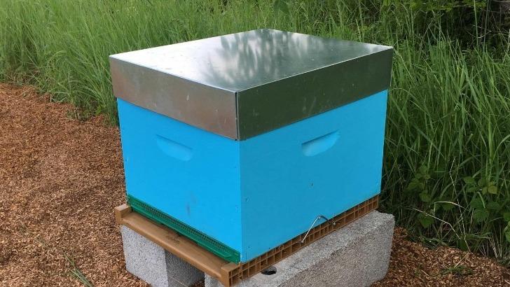 maison-boinaud-pratique-egalement-apiculture-et-produit-son-propre-miel
