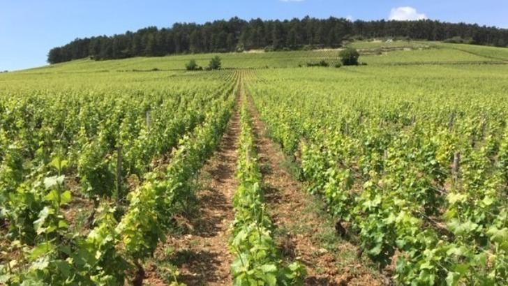 vins-alcools-domaine-domaine-du-cerberon-a-meursault
