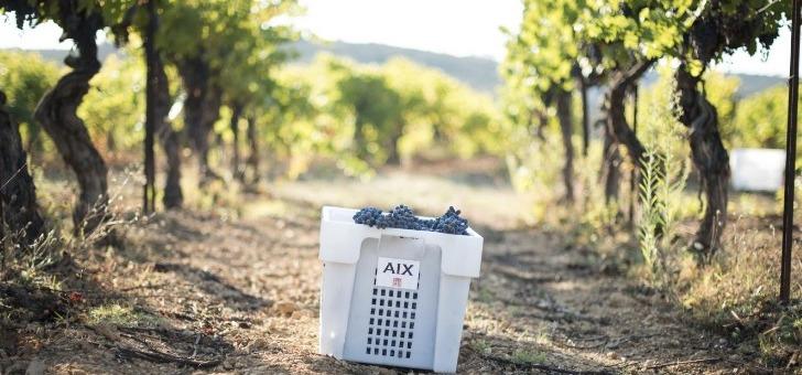 raisins-vigne-et-vendanges-de-maison-saint-aix-a-jouques