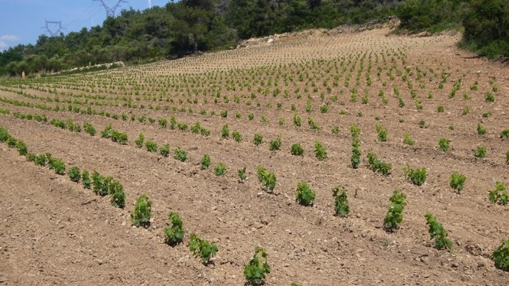 domaine-monastrel-terroir-et-vigne-comme-principaux-atouts