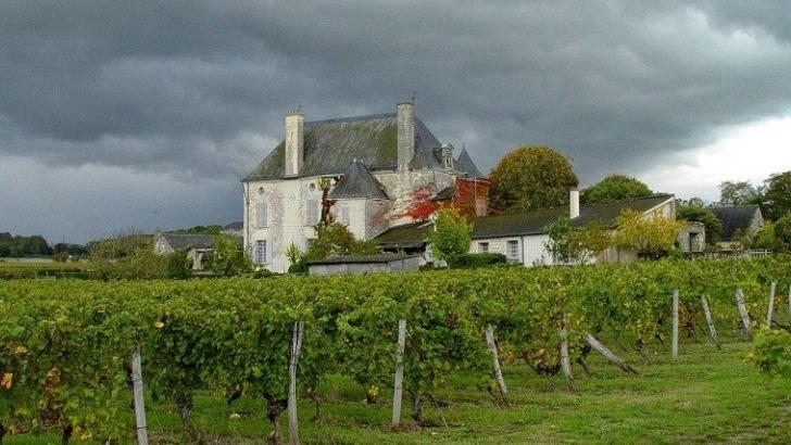 chateau-de-chaintres-un-sol-pauvre-oblige-un-enracinement-profond-des-racines-des-vignes