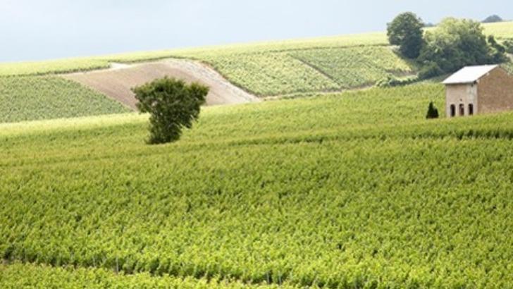 champagne-soutiran-une-exploitation-familiale-conduite-viticulture-raisonnee