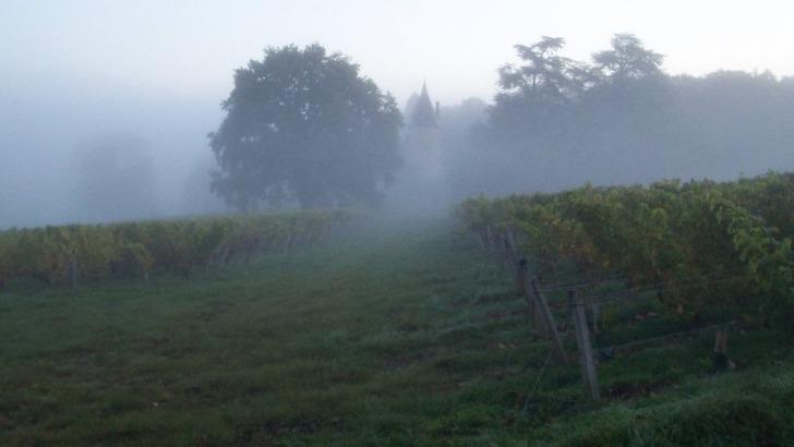 vignes-du-chateau-de-tracy-etendent-sur-36-hectares