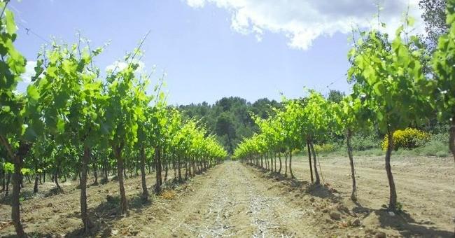 vins-alcools-domaine-chateau-paradis-a-le-puy-sainte-reparade