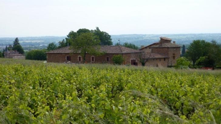 chateau-de-pravins-un-vignoble-plante-sur-un-terroir-ancien-presentant-des-sols-argilo-limoneux