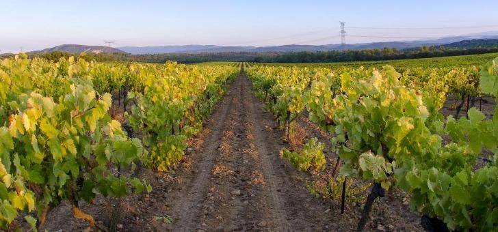 vignes-de-maison-saint-aix-a-jouques-une-belle-expression-des-vins-de-provence