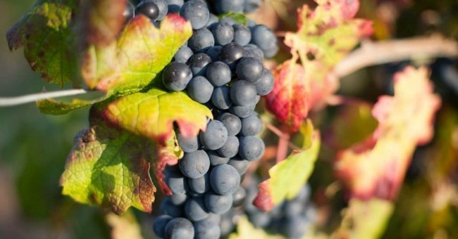 domaine-vino-vecchio-a-chiatra