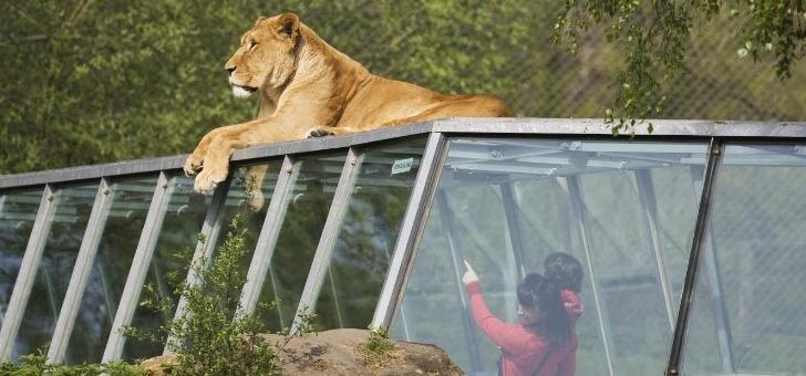 parc-zoologique-de-thoiry-a-decouverte-de-faune-sauvage