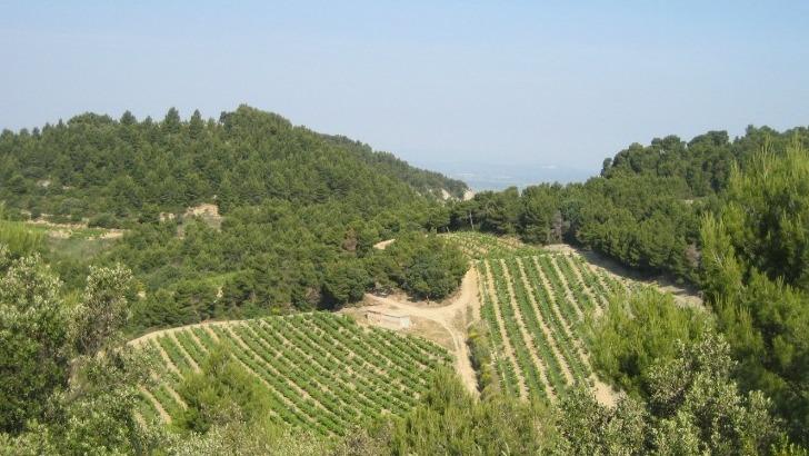 domaine-de-fontavin-a-courthezon-travaille-sur-5-appellations-retrouve-ici-vignes-de-gigondas-situees-sur-une-combe-sauvage