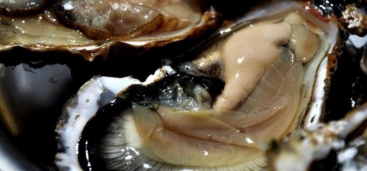 tifenn-yvon-a-locoal-production-d-huitres-nees-mer