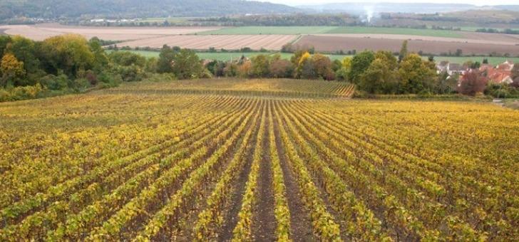 champagne-baron-albert-a-charly-sur-marne-un-terroir-de-55-hectares-reparti-sur-sept-villages-autour-de-vallee-de-marne