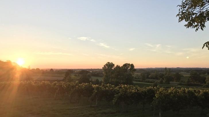 des-vignes-etendent-sur-38-hectares-au-coeur-des-collines-de-pujols
