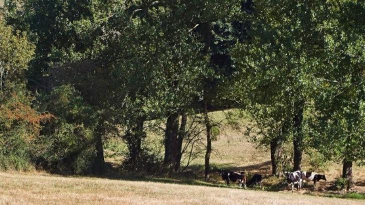 bio-chanvre-felinois-appuie-sur-agriculture-biologique-pour-faire-de-ses-produits-des-references-de-qualite