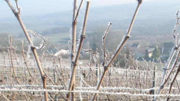 hiver-sur-vignes-emilien-fresne