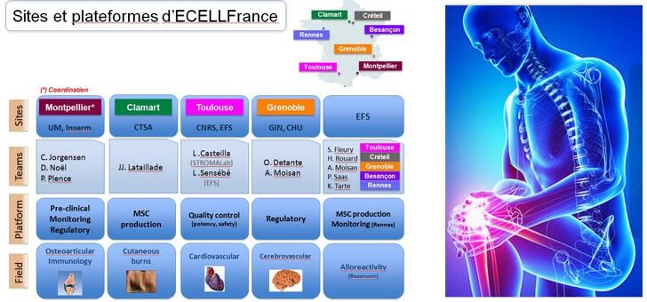 recherche-ecellfrance-a-montpellier-cedex-5