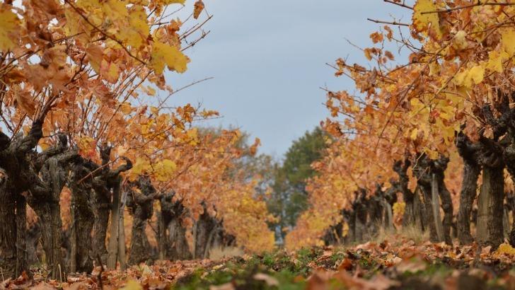 domaine-arvieux-sublimer-terroir-a-travers-des-vins-de-haute-qualite