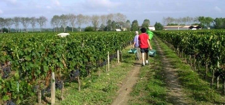 vins-alcools-domaine-domaine-les-chagnasses-a-lalande-de-pomerol