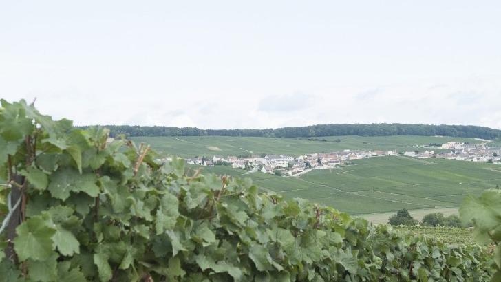 champagne-brisson-lahaye-des-terroirs-jouissant-de-appellation-premier-cru