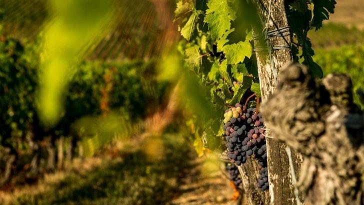 vignerons-de-buzet-des-produits-sains-et-naturels