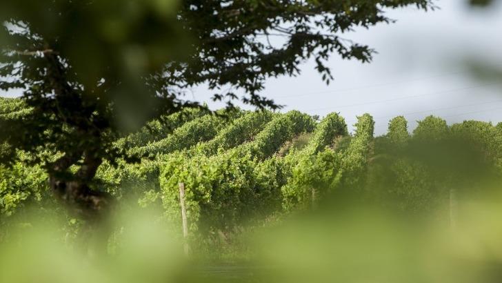 vinification-au-chateau-bellevue-foret-associe-techniques-ancestrales-et-methodes-modernes