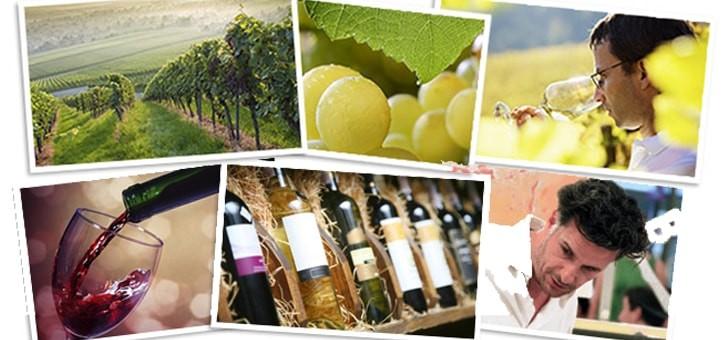 plus-grands-regions-viticoles-du-pays