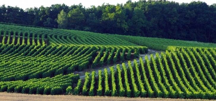 domaine-nomine-renard-a-villevenard-21-hectares-de-exploitation