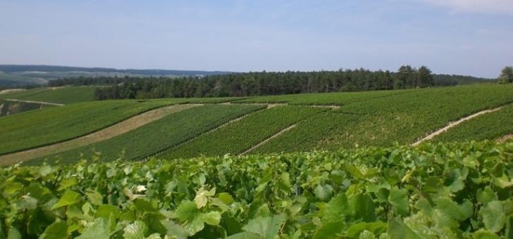 vignes-pleine-forme