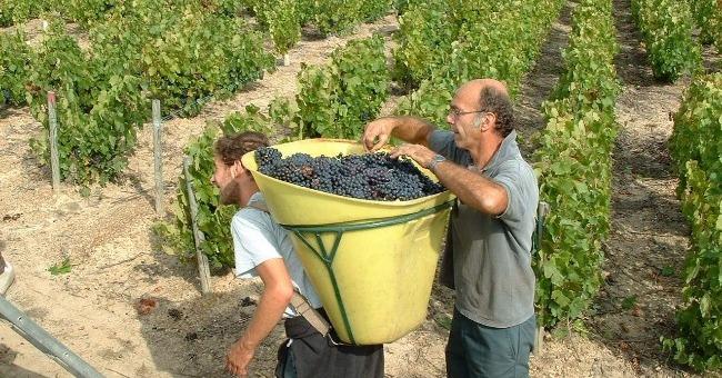 vignerons-de-bel-air-a-saint-jean-d-ardieres