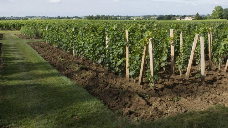 vignoble-chatonnet-toutes-conditions-sont-reunies-pour-elaborer-de-grands-vins