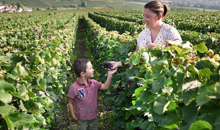 amour-vignes-c-est-de-generations-loriot