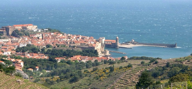 vignobles-terrasses-de-collioure