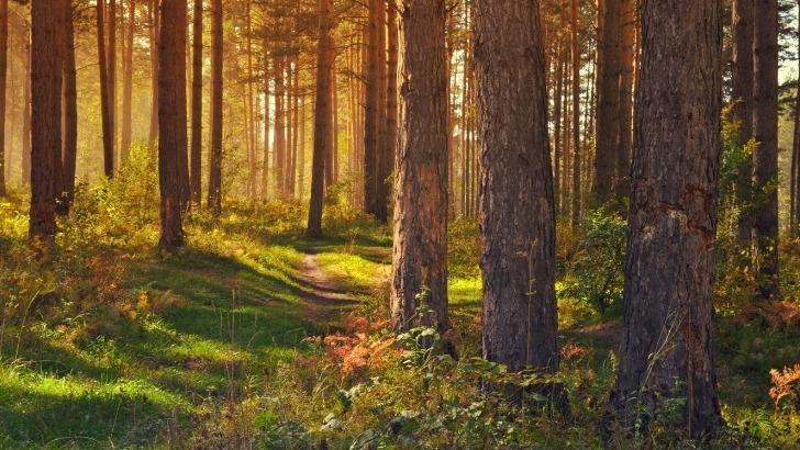 ecotree-bonne-gestion-forestiere-conjugue-parfaitement-avec-preservation-de-biodiversite
