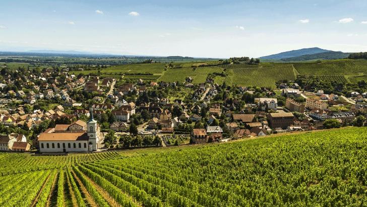 presente-sur-3-appellations-alsaciennes-alsace-grand-cru-vin-d-alsace-et-cremant-d-alsace-maison-klipfel-travaille-tous-cepages-emblematiques-du-terroir