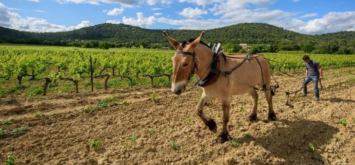 chateau-roque-a-fontanes-une-viticulture-biodynamique-respectueuse-de-nature
