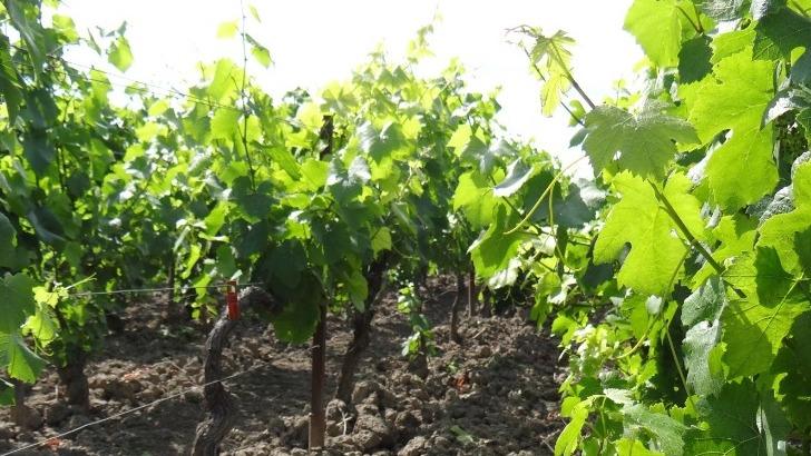 des-vignes-aimees-par-ses-artisans