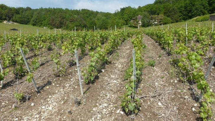 champagne-mathieu-princet-un-vignoble-de-9ha-reparti-sur-5-communes-de-appellation-champagne