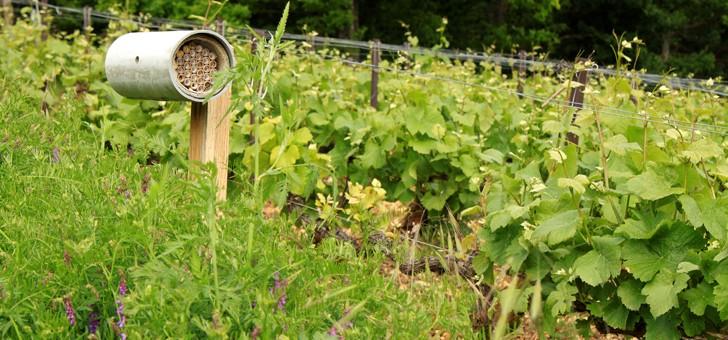 vignoble-travaille-viticulture-raisonnee