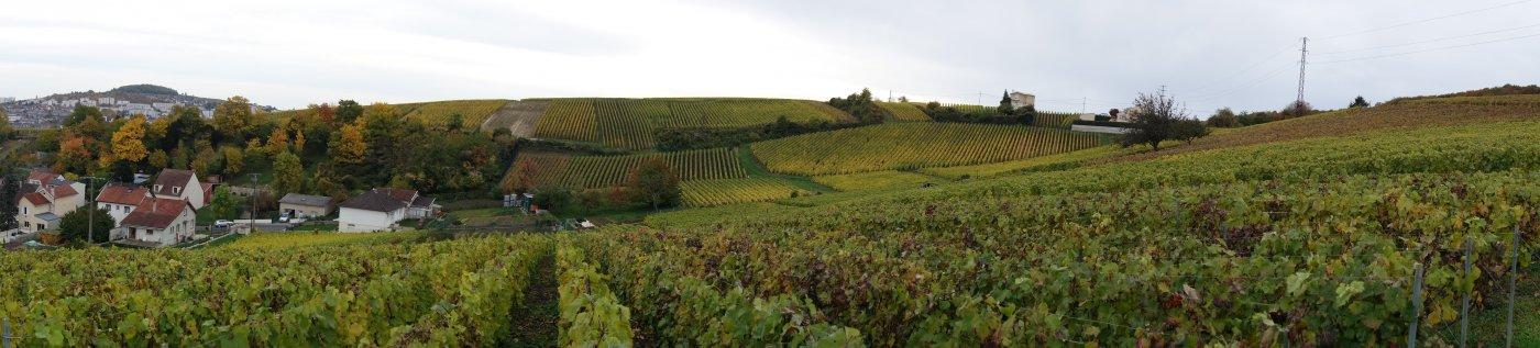 exploitation-didier-raimond-a-epernay-etend-actuellement-sur-7-ha