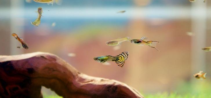 poissons-produisent-des-nutriments-seront-absorbes-par-plantes-tout-purifiant-eau
