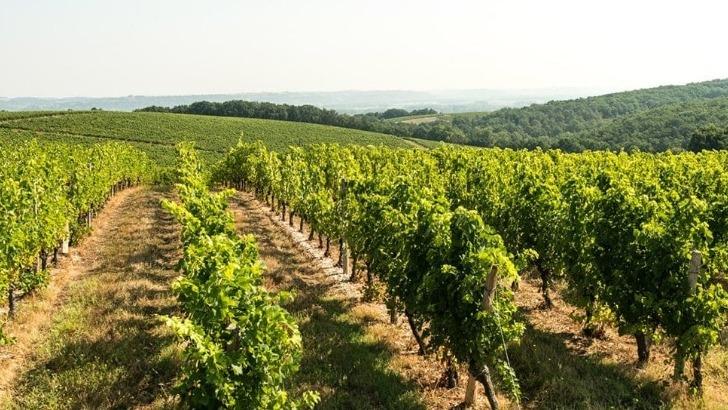 vignerons-de-buzet-une-cooperative-engagee-dans-developpement-durable