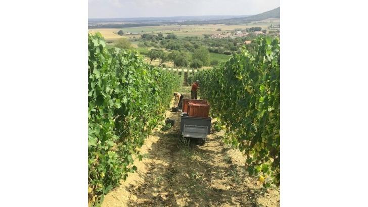 vins-alcools-domaine-domaine-francis-demange-a-bruley