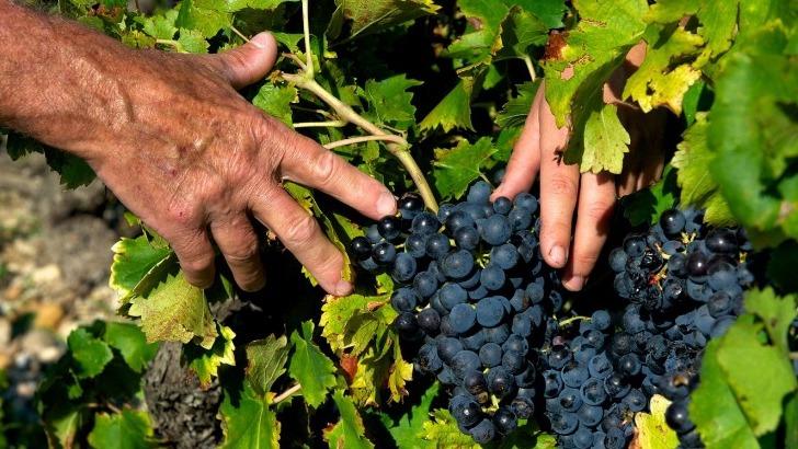 domaine-de-fontavin-a-courthezon-est-labellise-ab-agriculture-biologique-et-vigneron-independant