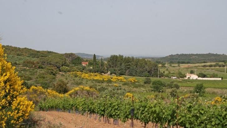 domaine-grange-vigne-developpe-au-milieu-des-haies-sauvages-et-des-herbes-aromatiques
